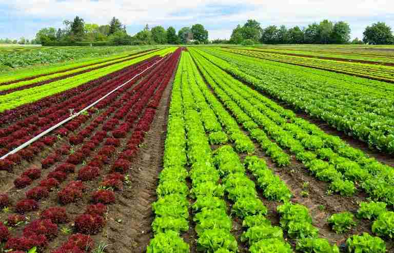 Ecological Landscaping & Farming – What are it and the virtues related to it?
